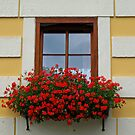 An Austrian Window. by Lee d'Entremont