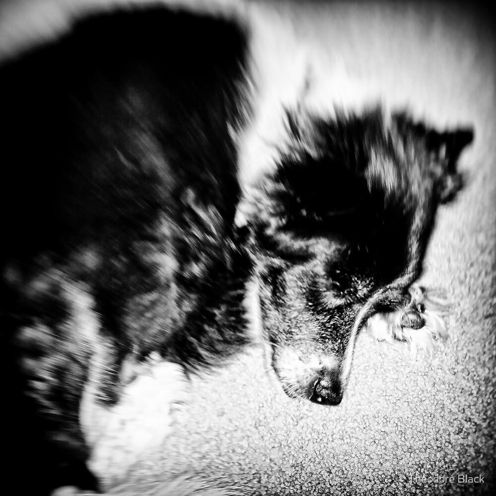 Sleeping Dog 2 by Theodore Black