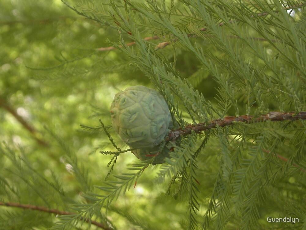 UNA PIGNA , una sequoia, un parco... Parma ITALIa-europa-. 2000 VISUALIZZAZ.MAGGIO 2013 .. VETRINA RB 25 SETTEMBRE 2012 --- by Guendalyn