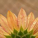 Sunflower by elasita