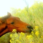 Lucky Horse Saved From The Triple B Roundup  by Jeanne  Nations