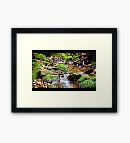 Contemplating Nature III Framed Print