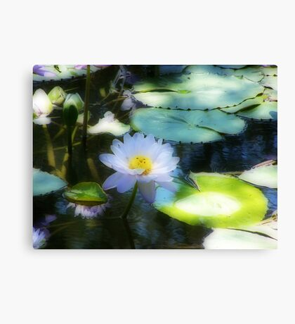 Water Lily Orton effect Canvas Print
