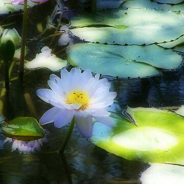 Water Lily Orton effect by MaKay