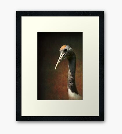 Noble and immortal - the Japanese Crane Framed Print