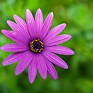 Purple Flower by PhotoWorks