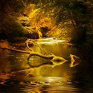 Landscape by Svetlana Sewell