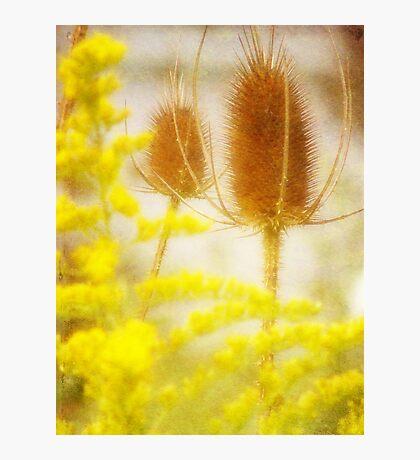 A Natural Mix Fotodruck