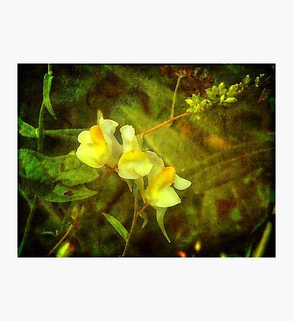 Little Lovelies of Yellow Fotodruck