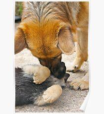 Mothering (German Shepherd 'mum' and pup) Poster