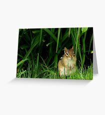 Backyard Wildlife Greeting Card