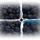 Blackberries by Jonice