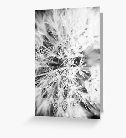 Dandelion, Close up. Greeting Card