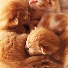 Day old kittys by PrettyKitty
