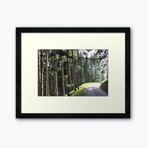 Schanfigger forest Framed Art Print
