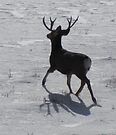 running buck on silver snow by Christine Ford