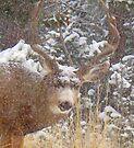 snow buck by Christine Ford