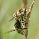 Bee Flies by marens