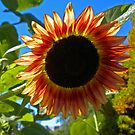 Summer Sun Shining Through. by Lee d'Entremont