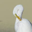 White Heron by Anangeli