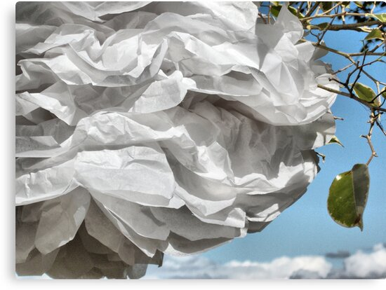 Paper White. by Lynne Haselden