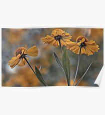 False Sunflower (Helenium) Poster