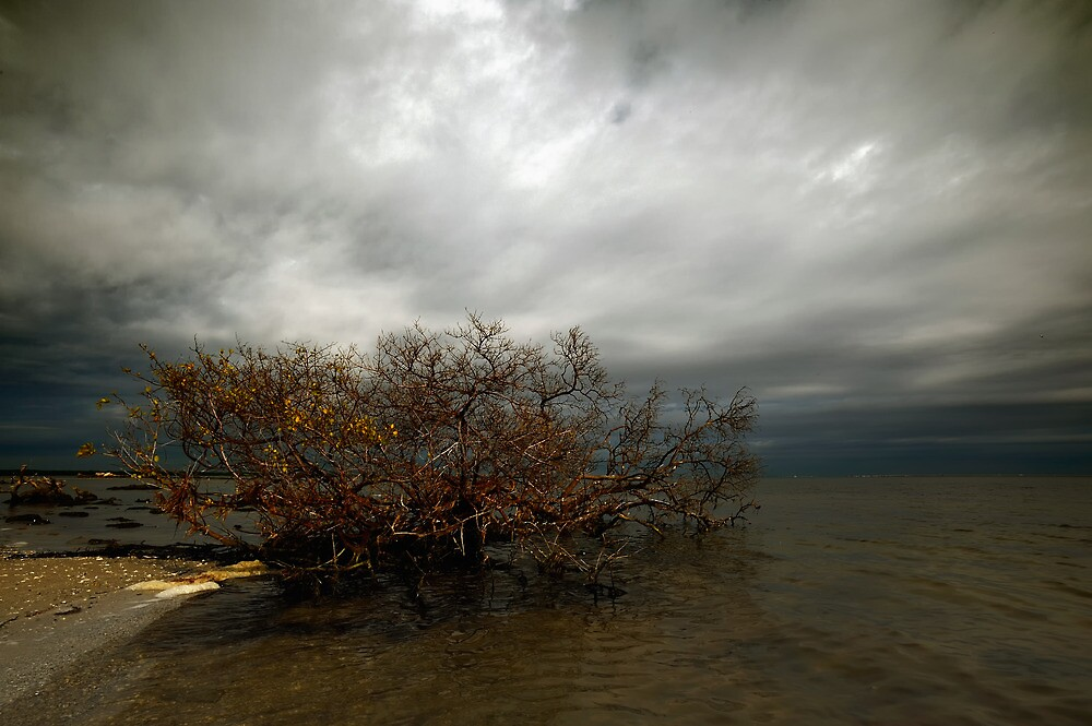 red mangroves by james smith