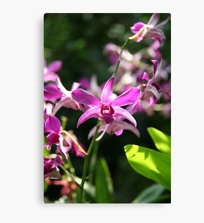 Summer Purple - Orchid Canvas Print