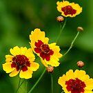 Beautiful Wildflowers by Mechelep