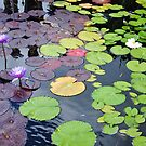 Lily Changing Season by Polly Greathouse