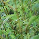 Green Bamboo by trishringe