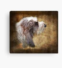 Shaggy dog Canvas Print