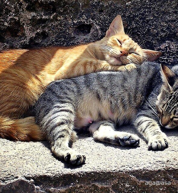sleeping pair by agawasa