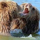 When grizzlies disagree by Alan Mattison