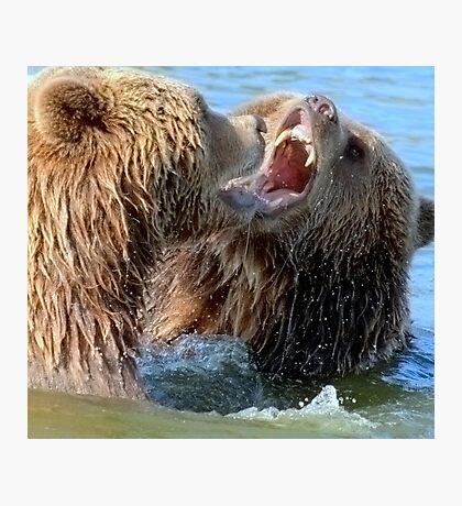 When grizzlies disagree Photographic Print