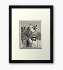 COW BROWN  Framed Print
