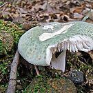 Green Mushroom - Russula crusosa by MotherNature