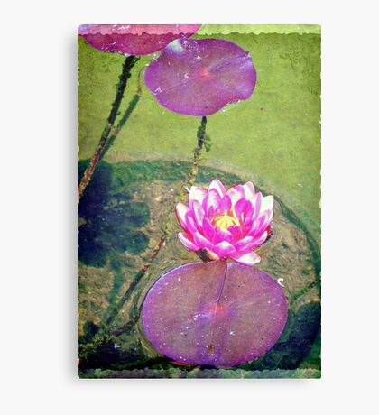 Pretty water lily © Canvas Print
