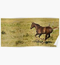 Zoom!  Racing filly, Montana photo, Donna Ridgway Poster
