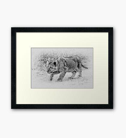 The Stalk  Framed Print