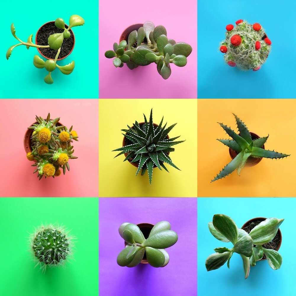 Plant Color Pop Collage by hipaholic