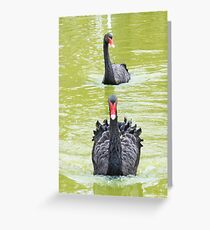 Speedy swan, Wave Rock, Western Australia Greeting Card