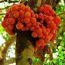 Large orange Fungi  by bobby1