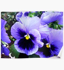 Pansy Profusion Poster