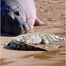 FRIENDS FOR......EVER, WITH MY SIZE... YES! - the Hippo's and the Crocodiles von Magriet Meintjes