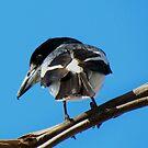 Grey Butcher Bird ~ Western Australia by Toni Kane