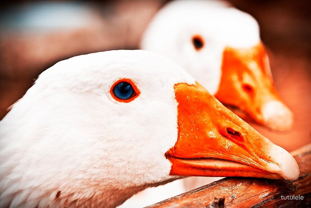 Geese. by tutulele
