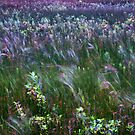 The Prairie Wind Painted The Picture Irwin State Nature Preserve  by MLabuda
