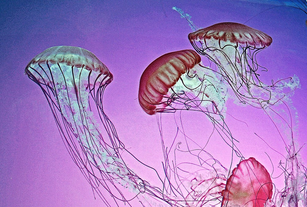 Dance of the Jellyfish by Rodney Campbell