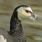 Downy Beak by Robert Abraham